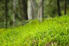 Hierba verde fina Imágenes de archivo libres de regalías