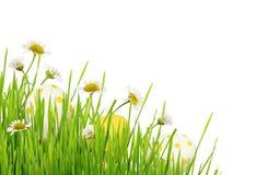 Hierba verde, flores de la margarita y huevos de Pascua en una esquina Fotografía de archivo libre de regalías