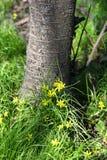 Hierba verde, flores debajo de un árbol Imagenes de archivo