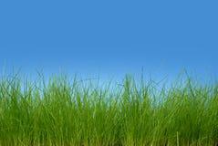 Hierba verde fresca Foto de archivo libre de regalías