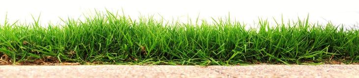 Hierba verde fresca foto de archivo