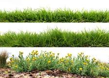 Hierba verde fresca Imágenes de archivo libres de regalías