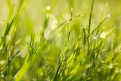 Hierba verde fresca con descensos de rocío en el amanecer Fotografía de archivo