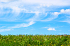 Hierba verde fresca con el cielo azul brillante Imágenes de archivo libres de regalías