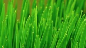 Hierba verde fresca con las gotas de agua almacen de metraje de vídeo