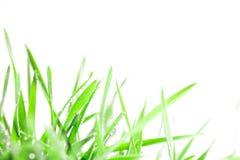 Hierba verde fresca con las gotitas después del fondo de la lluvia imagen de archivo libre de regalías