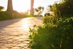 Hierba verde fresca en la naturaleza que enmarca el sol en el centro y que forma rayos de la luz Fotos de archivo