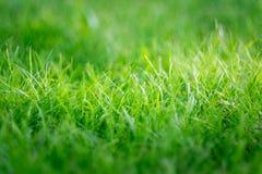 Hierba verde fresca en verano Foto de archivo
