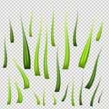 Hierba verde fresca realista, detallada estupenda del vector La planta aislada proviene para el ejemplo delantero de la naturalez libre illustration