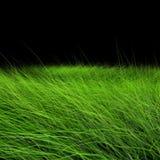Hierba verde hermosa ilustración del vector