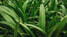 Hierba verde hermosa Foto de archivo libre de regalías