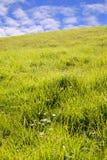 Hierba verde hermosa del condado kerry Foto de archivo