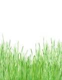 Hierba verde joven Fotografía de archivo
