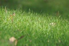 Hierba verde joven Fotos de archivo