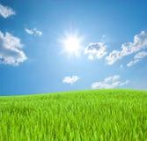 Hierba verde joven y el cielo con el sol Fotos de archivo libres de regalías