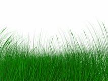 Hierba verde jugosa Foto de archivo libre de regalías