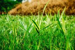 Hierba verde jugosa fresca como fondo, primer imagenes de archivo