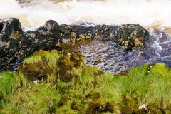 Hierba verde larga por el agua blanca Fotos de archivo libres de regalías