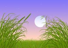 Hierba verde - Luna Llena - cielo nocturno foto de archivo