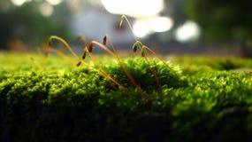 Hierba verde macra Foto de archivo libre de regalías