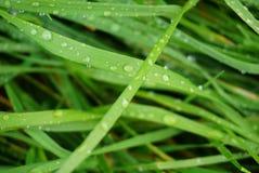 Hierba verde mojada Imagen de archivo libre de regalías