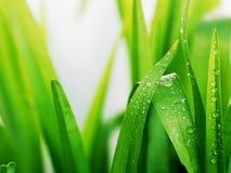 Hierba verde mojada Fotos de archivo libres de regalías