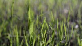 Hierba verde mojada bajo la lluvia que se mueve con el viento en el bosque almacen de metraje de vídeo