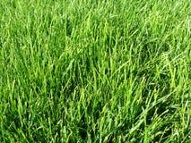 Hierba verde perfecta Fotografía de archivo libre de regalías