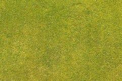 Hierba verde que pone Fotos de archivo