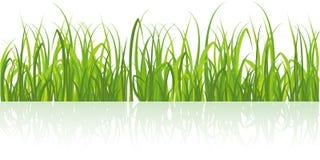 Hierba verde realista aislada en blanco Foto de archivo libre de regalías