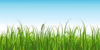 Hierba verde realista con rocío Imagenes de archivo