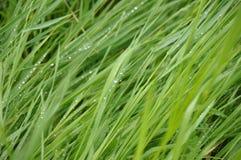 Hierba verde, rocío en troncos Imágenes de archivo libres de regalías