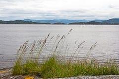 Hierba verde silueteada contra el agua Fotos de archivo