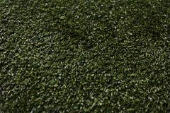 Hierba verde sintetizada foto de archivo libre de regalías