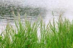 Hierba verde sobre el agua Fotos de archivo