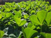 Hierba verde suave debajo del jardín del brillo del sol en casa Imagenes de archivo