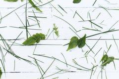 Hierba verde tajada Imágenes de archivo libres de regalías