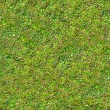 Hierba verde Textura inconsútil de Tileable fotografía de archivo