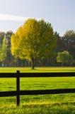 Hierba verde, un árbol colorido y una cerca de madera Fotografía de archivo