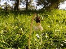 Hierba verde verde Imagen de archivo libre de regalías