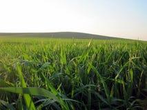 Hierba verde verde de la primavera Fotos de archivo