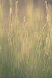 Hierba verde verde, en el piso más forrest, brillando en el sol del verano imagenes de archivo
