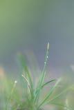 Hierba verde verde, en el piso más forrest, brillando en el sol del verano Fotos de archivo