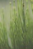 Hierba verde verde, en el piso más forrest, brillando en el sol del verano Imágenes de archivo libres de regalías