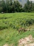 Hierba verde y árboles verdes imagen de archivo