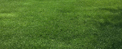 Hierba verde y césped fotografía de archivo libre de regalías