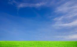 Hierba verde y cielo azul Fotografía de archivo libre de regalías