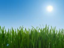 Hierba verde y cielo azul Imagenes de archivo