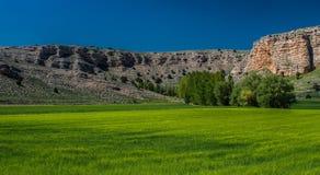 Hierba verde y cielo azul Foto de archivo libre de regalías