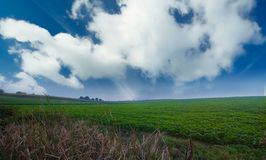 Hierba verde y cielo azul imagen de archivo